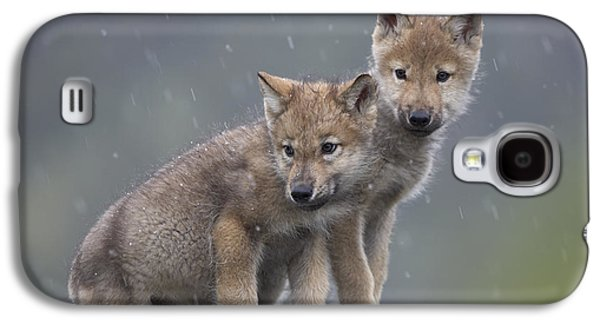 Gray Wolf Canis Lupus Pups In Light Galaxy S4 Case