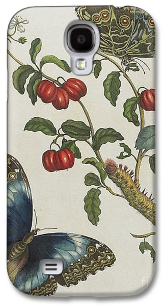 Great Blue Butterflies And Red Fruits Galaxy S4 Case by Maria Sibylla Graff Merian