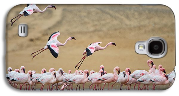 Greater Flamingos Phoenicopterus Galaxy S4 Case by Panoramic Images