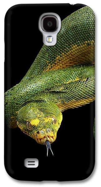 Green Tree Python. Morelia Viridis. Isolated Black Background Galaxy S4 Case