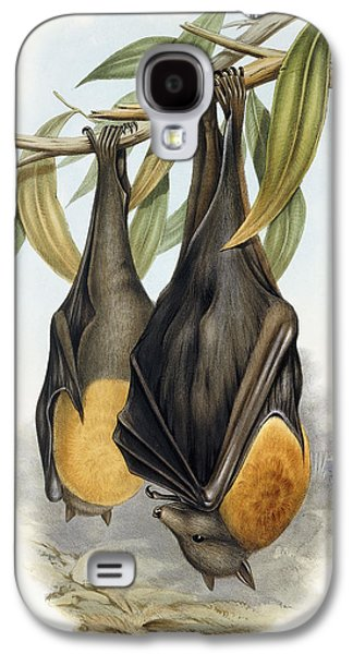 Grey Headed Flying Fox, Pteropus Poliocephalus Galaxy S4 Case by John Gould
