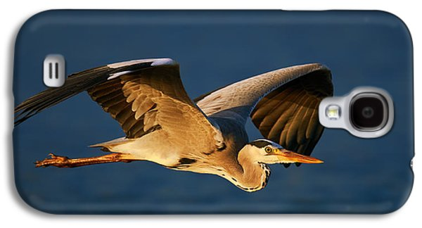 Grey Heron In Flight Galaxy S4 Case
