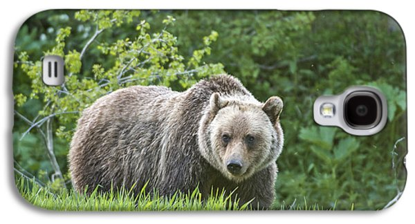 Grizzly Bear Galaxy S4 Case