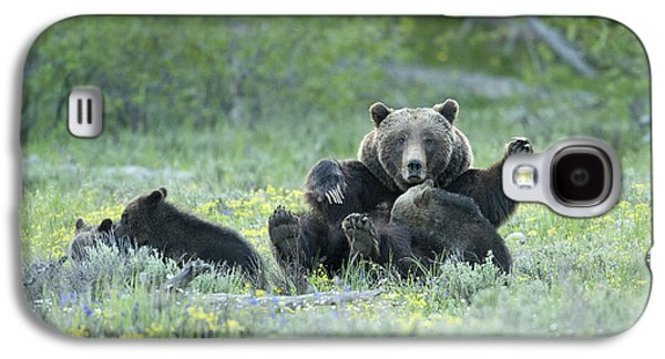 Feeding Young Galaxy S4 Case - Grizzly Romp - Grand Teton by Sandra Bronstein