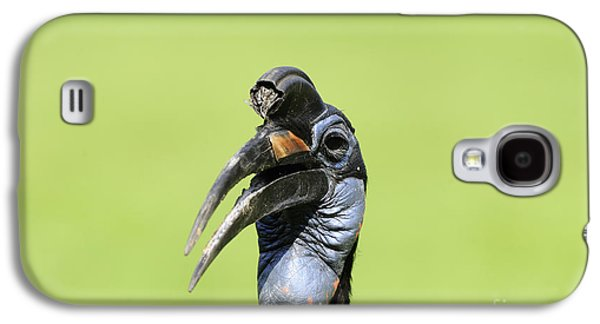 Ground Hornbill Galaxy S4 Case by David & Micha Sheldon