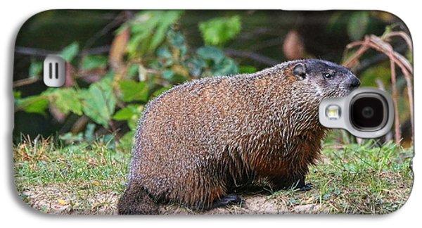 Groundhog  0590 Galaxy S4 Case by Jack Schultz