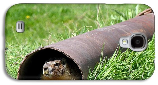 Groundhog In A Pipe Galaxy S4 Case by Will Borden