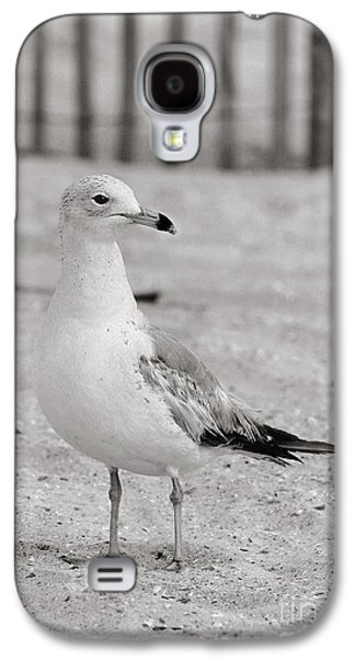 Land Sea And Sky Series Gull Galaxy S4 Case