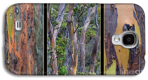 Gum Trees At Lake St Clair Galaxy S4 Case by Werner Padarin