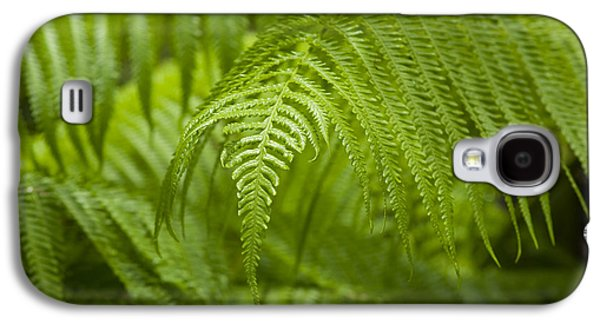 Hapu'u Tree Ferns Galaxy S4 Case