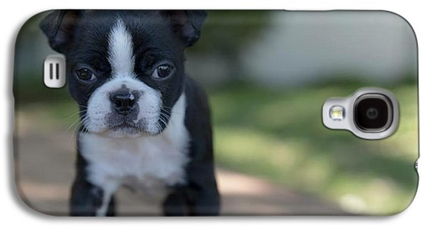 Galaxy S4 Case featuring the photograph Harley As A Puppy by Lora Lee Chapman
