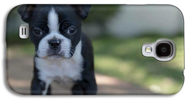 Harley As A Puppy Galaxy S4 Case by Lora Lee Chapman