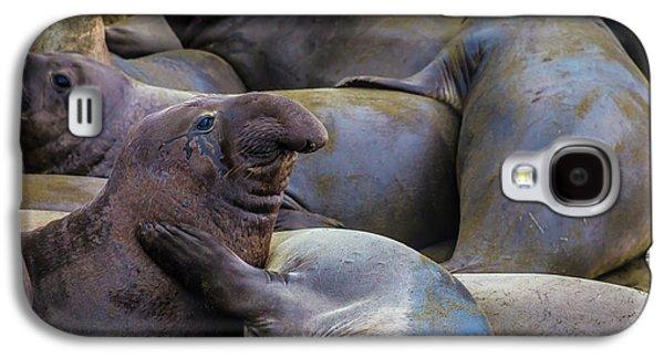 Heard Of Elephant Seals Galaxy S4 Case