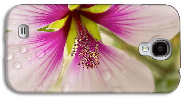 Hibiscus After The Rain Galaxy S4 Case by Ana V Ramirez