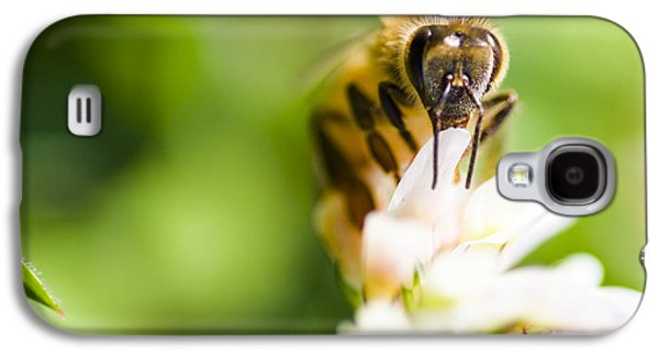 Honey Bee On Clover Flower Galaxy S4 Case
