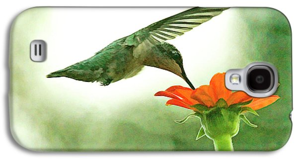 Female Hummingbird And Zinnia In Morning Light Galaxy S4 Case