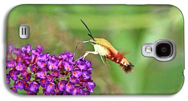 Humming Bird Moth Galaxy S4 Case