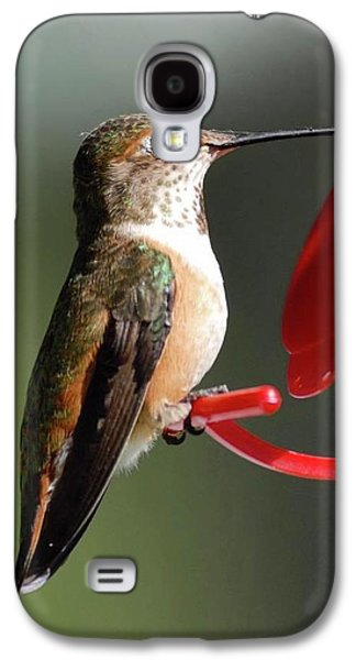Hummingbird Galaxy S4 Case