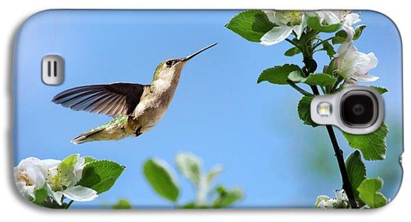 Hummingbird Springtime Galaxy S4 Case