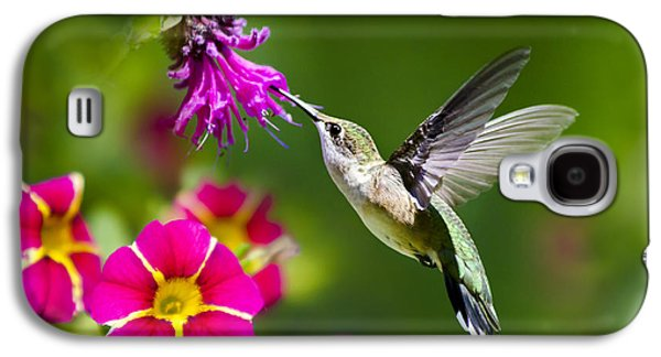 Hummingbird With Flower Galaxy S4 Case by Christina Rollo