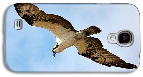 Hunter Osprey Galaxy S4 Case by Carol Groenen