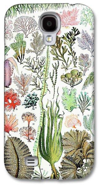 Illustration Of Algae And Seaweed  Galaxy S4 Case