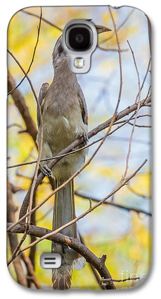 Indian Grey Hornbill Galaxy S4 Case by B. G. Thomson