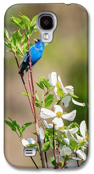 Indigo Bunting In Flowering Dogwood Galaxy S4 Case by Bill Wakeley