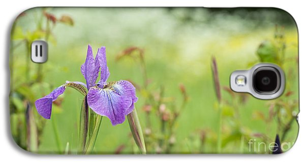 Iris Sibirica Sparkling Rose Galaxy S4 Case by Tim Gainey