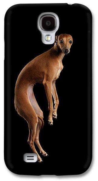 Dog Galaxy S4 Case - Italian Greyhound Dog Jumping, Hangs In Air, Looking Camera Isolated by Sergey Taran