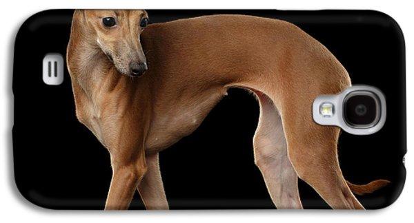 Dog Galaxy S4 Case - Italian Greyhound Dog Standing  Isolated by Sergey Taran