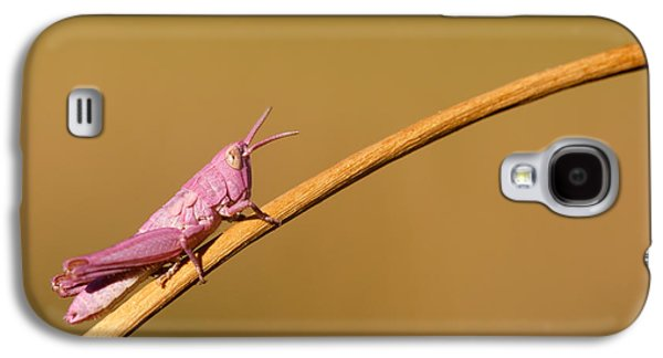 Grasshopper Galaxy S4 Case - It's Not Easy Being Pink by Roeselien Raimond