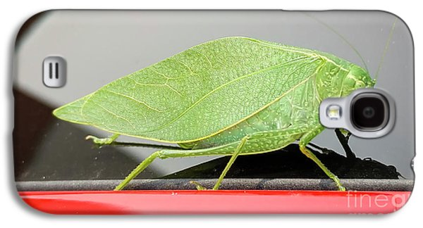 Katydids- Bush Crickets Galaxy S4 Case