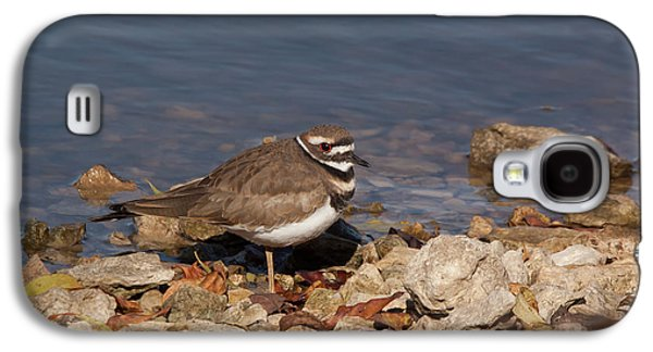 Killdeer Galaxy S4 Case - Kildeer On The Rocks by Robert Frederick