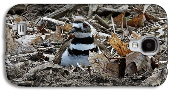 Killdeer Galaxy S4 Case - Killdeer On It's Nest 2682 by Michael Peychich