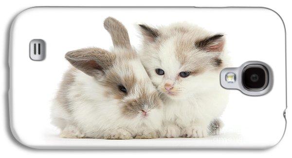 Kitten Cute Galaxy S4 Case