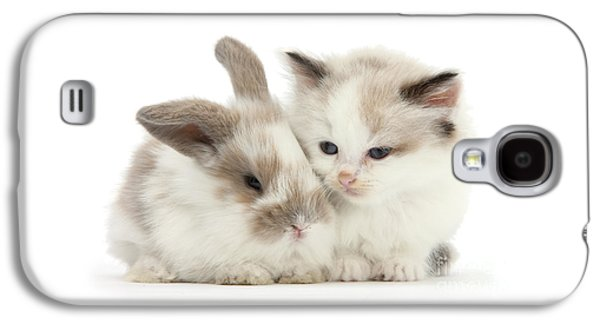 Kitten Cute Galaxy S4 Case