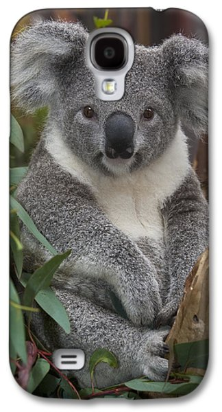 Koala Phascolarctos Cinereus Galaxy S4 Case by Zssd