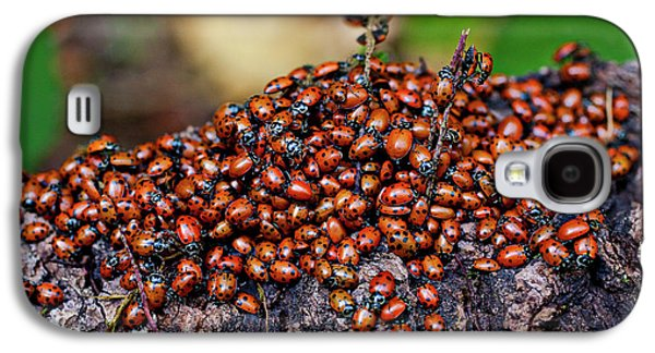 Ladybugs On Branch Galaxy S4 Case by Garry Gay