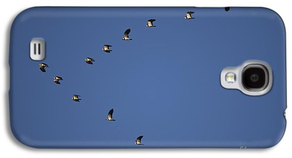 Lapwing Flock Galaxy S4 Case by Per-Olov Eriksson