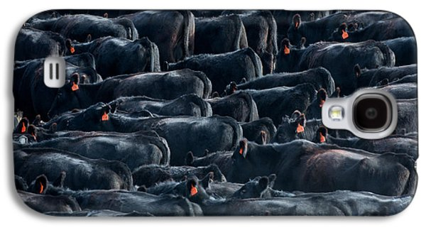 Large Herd Of Black Angus Cattle Galaxy S4 Case by Todd Klassy
