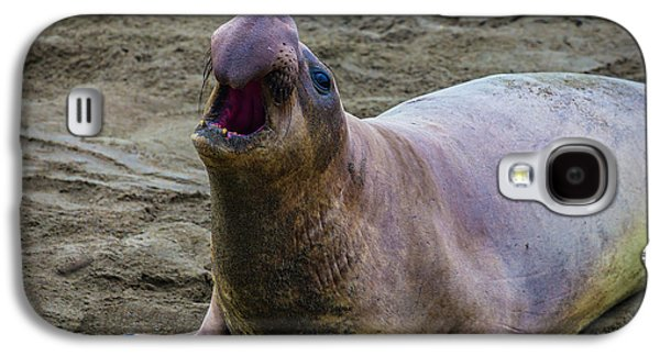 Large Male Elephant Seal Galaxy S4 Case