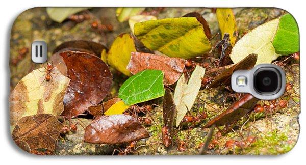 Leaf-cutter Ants Galaxy S4 Case by B.G. Thomson