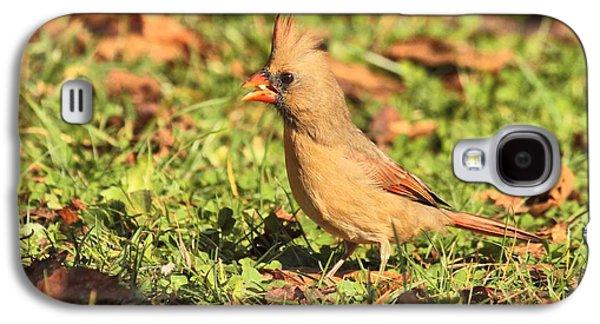 Leafy Cardinal Galaxy S4 Case
