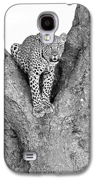 Leopard In A Tree Galaxy S4 Case by Richard Garvey-Williams