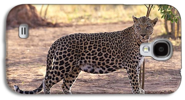 Leopard Galaxy S4 Case by Keith Levit