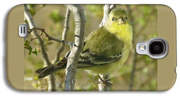 Lesser Goldfinch 1 Galaxy S4 Case