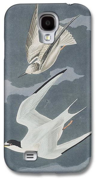 Lesser Tern Galaxy S4 Case by John James Audubon