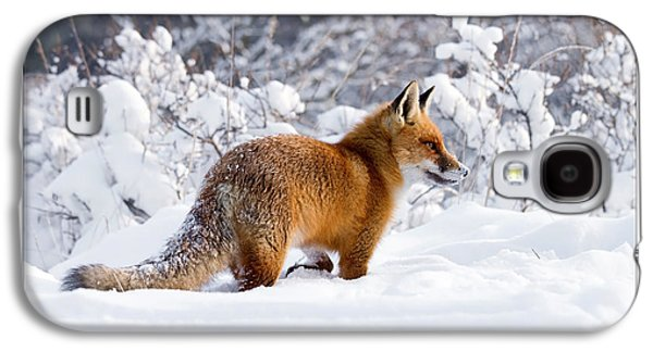 Let It Snow 1 - Christmas Card Red Fox In The Snow Galaxy S4 Case