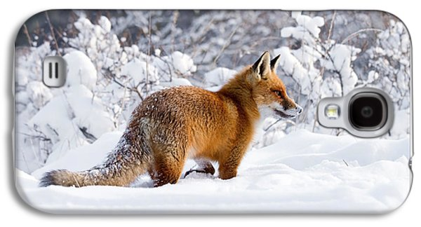 Let It Snow 5 - New Years Card Red Fox In The Snow Galaxy S4 Case